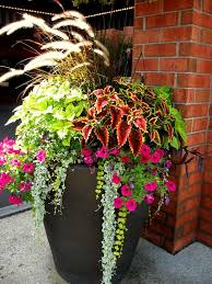Hanging Plants For Patio Best 25 Front Porch Planters Ideas On Pinterest Front Door