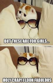 Cartoon Cat Memes - funny cat memes reasons you should fall in love with your funny cat
