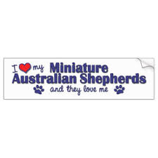 australian shepherd furever australian shepherd stickers zazzle