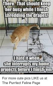 Shredding Meme - there that should keep her busy while i finish shredding thedrapes