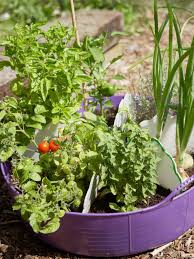 easy plants for kids to grow hgtv