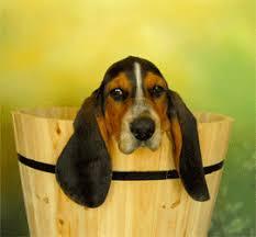 mon fait pipi sur le canapé mon chien fait pipi ou caca partout dans la maison mon chien