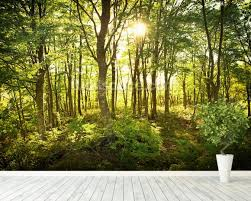tree wallpaper u0026 forest wallpaper murals wallsauce usa
