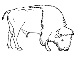 bison coloring pages getcoloringpages com