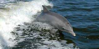 Seeking Dolphin Dolphin Threats To Dolphins Defenders Of Wildlife