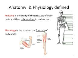 Anatomy And Physiology Definitions Introduction To Human Anatomy U0026 Physiology 1 Anatomy U0026 Physiology
