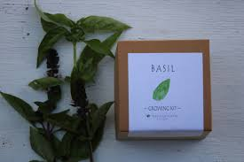 seed kit indoor herb garden basil seeds basil plant basil seed