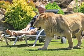 Excepcional G1 - Tcheco mantém leões de estimação que parecem 'gatinhos  @HF16