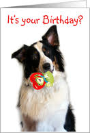 birthday on valentine u0027s day cards from greeting card universe