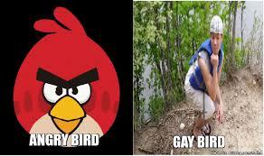 Angry Bird Meme - angry bird vs gay bird allkpop meme center