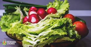 4 simple tips on harvesting and storing your lettuce harvest this fall
