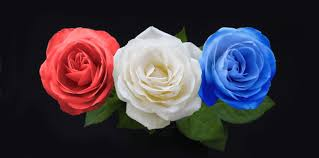 blue roses symbolic meaning of blue roses that ll leave you stupefied