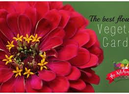 the best flowers for the vegetable garden the kitchen garten dunneiv