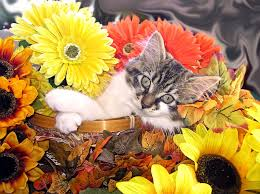 adorable baby cat cool kitten chilling in a flower basket