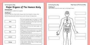 The Human Body Picture The Human Body Ks2 Science Resources Page 1