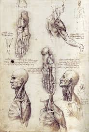 ancient anatomy sketches of the past the almost doctor u0027s channel
