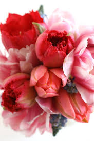 Beautiful Flower Pictures 613 Best Red Flowers Images On Pinterest Flowers Garden Nature