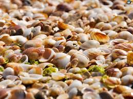 112 best beyond the sea images on pinterest sea shells beyond