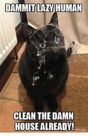 Grumpy Cat Meme Clean - best 25 ideas about cat memes clean find what you ll love