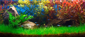 Live Plants In Community Aquariums by Plants U0026 Flowers Aquarium Plants