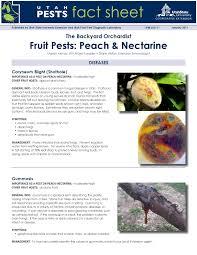 fruit pests peach u0026 nectarine by utah state university extension