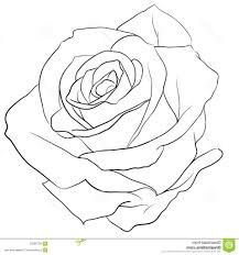 rose outline drawing 1000 images about rose on pinterest rose