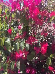 Flowers In Bismarck Nd - mother u0027s day specials in bismarck 2017