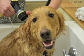Dogs In The Bathtub Petsaver Healthy Pet Superstorepetsaver Healthy Pet