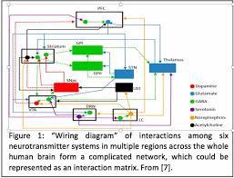 can a schizophrenia simulator explain imbalances in the brain
