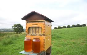 Harvesting Honey From A Top Bar Hive Flow Hive Lets Beekeepers Harvest Honey Without Disturbing The