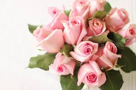 pink and roses roses pink valentines free image on pixabay
