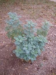 san antonio native plants seeds texasbutterflyranch