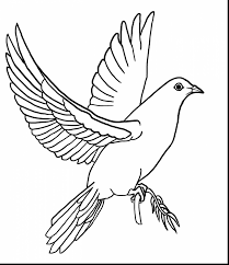 extraordinary dove drawings pencil with dove coloring page