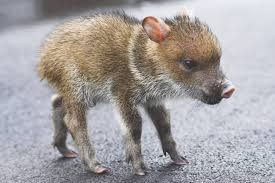 Arkansas wild animals images 9 animals you might not know are native to the u s mnn mother jpg