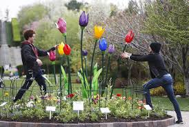 thanksgiving point all abloom as annual tulip festival opens ksl