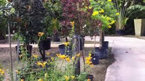 touring gorgeous south fl living color garden center part 3 of 3