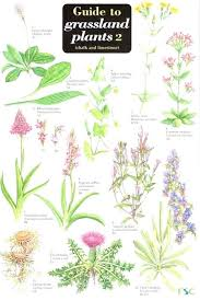 herb chart plant identification by pictures guide to grassland plants 2 chalk