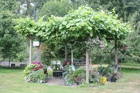 pergola climbing vines ubc botanical garden forums