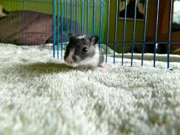 Hamster Cages Petsmart Petsmart The Happy Gerbil