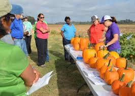 Local Pumpkin Farms In Nj by Growers Learn Ways To Profit From Pumpkin Patches