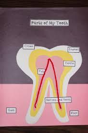 from the hive dental health hygiene lesson plans 1st grade dsc