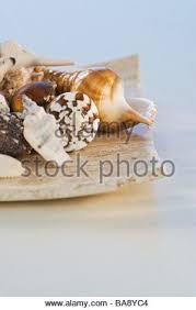 Assorted Seashells Still Life Of Assorted Seashells Stock Photos U0026 Still Life Of