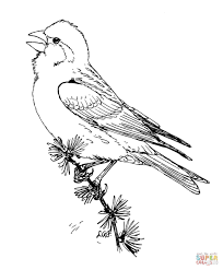 purple finch birds coloring page free printable coloring pages