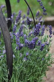 small plant supports august in the flower garden www coolgarden me