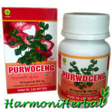 kapsul purwoceng tanaman purwoceng juga mendapat sebutan viagra