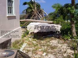 caymannature cayman plants caymannature salvia caymanensis cayman sage