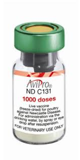 avipro newcastle disease proultry com avicultura para