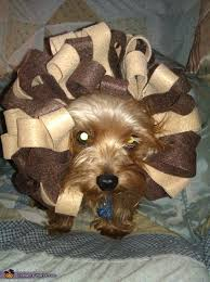 Cowardly Lion Costume Cowardly Lion Costume For Dogs