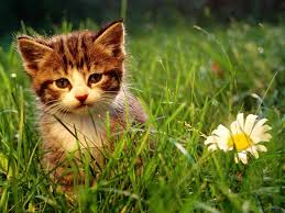 cute wallpapers for computer cat wallpaper for computer screen saver amazing 44 wallpapers of