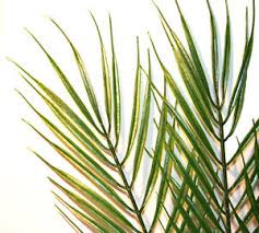 palm leaves for palm sunday artificial palm leaves choose qty wedding crafts palm sunday